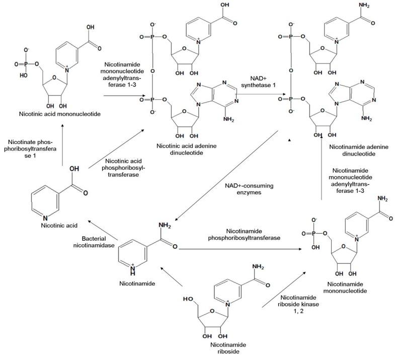 Figure1 -De novo pathway